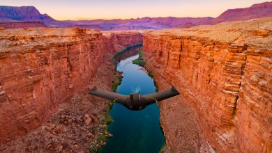 The factor that drives drone adoption